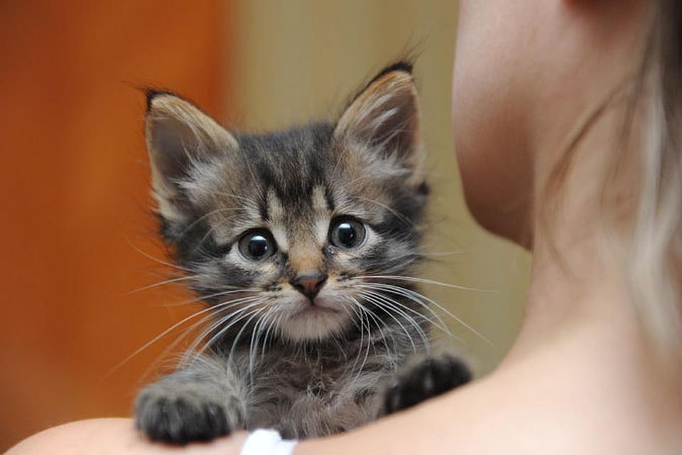 В Твери заблокировали сообщество по защите животных