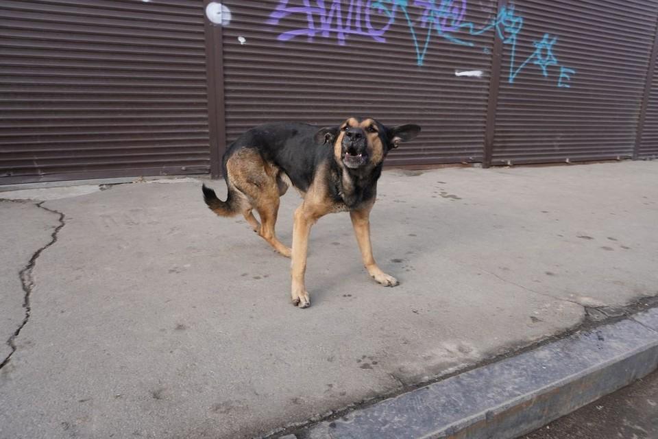 По городу бегают бродячие собаки.