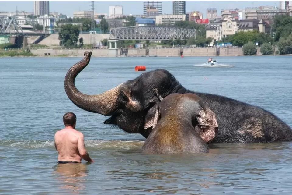 Купание слонов в Оби стало одним из интересных событий 2008 года
