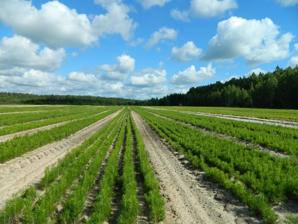Нижегородская область вошла в ТОП-10 России по эффективности использования леса