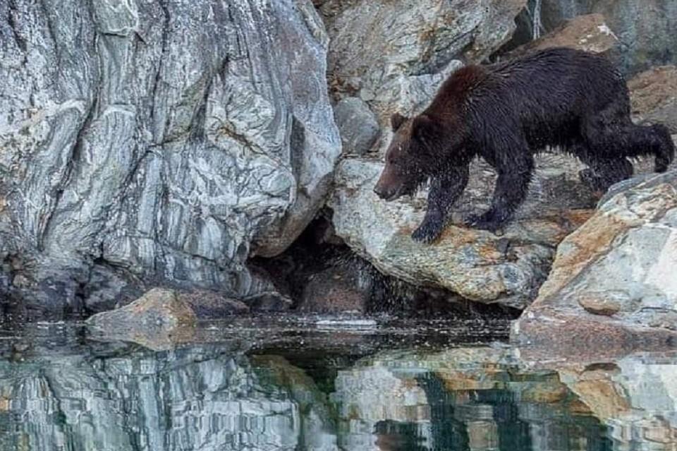 Медведю в тот день не повезло, он не поймал ни одной рыбки. Фото: Артура МУРЗАХАНОВА