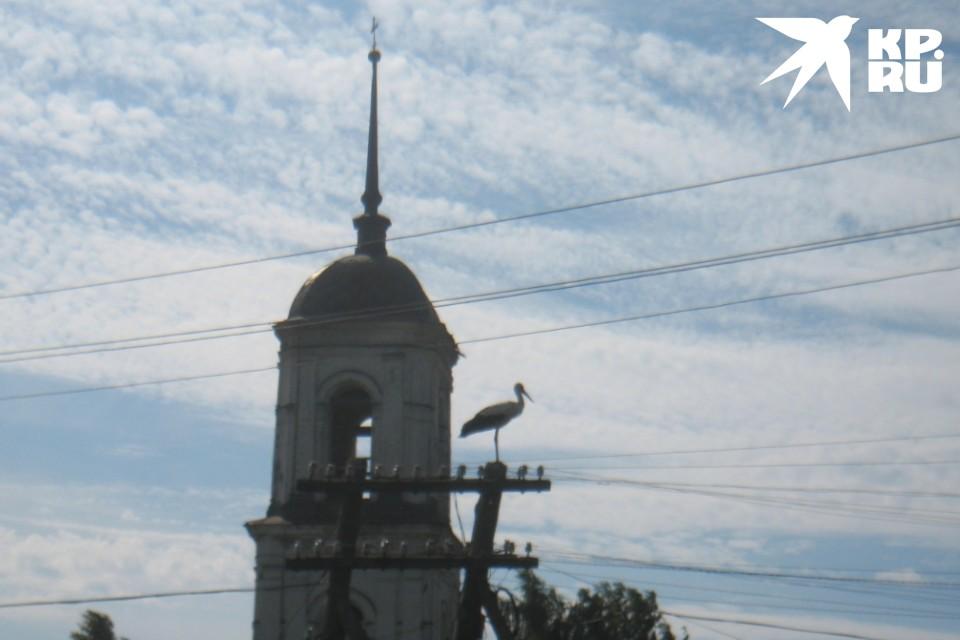 Аист - символ родины и благополучия. Фото: Ольга ИВАНОВА
