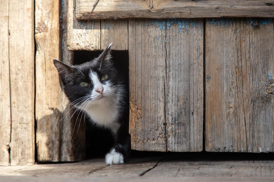 Перепись котов в Москве продлится все лето.
