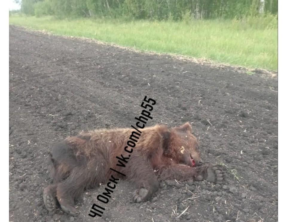 Труп медвежонка нашли в Любинском округе. Фото: instagram.com/chpomsk