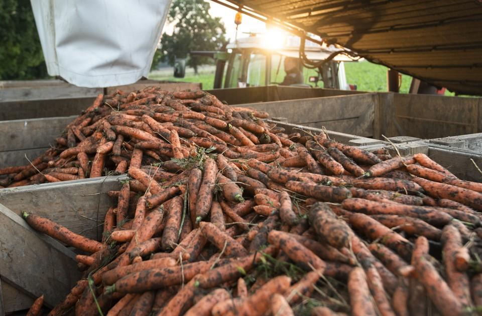 Цены на морковь в Башкирии продолжают расти