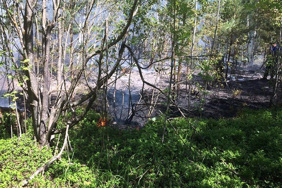 В Тверской области тушили лесной пожар Фото: ГУ МЧС России по Тверской области