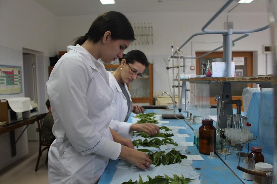 Фото: пресс-службы Субтропического научного центра РАН