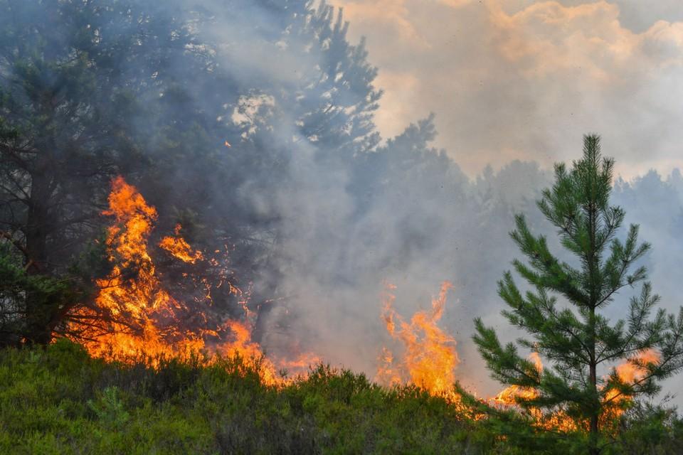 21 человек огнеборец тушил лесной пожар в Руднянском районе. Фото: ГУ МЧС России по Смоленской области.