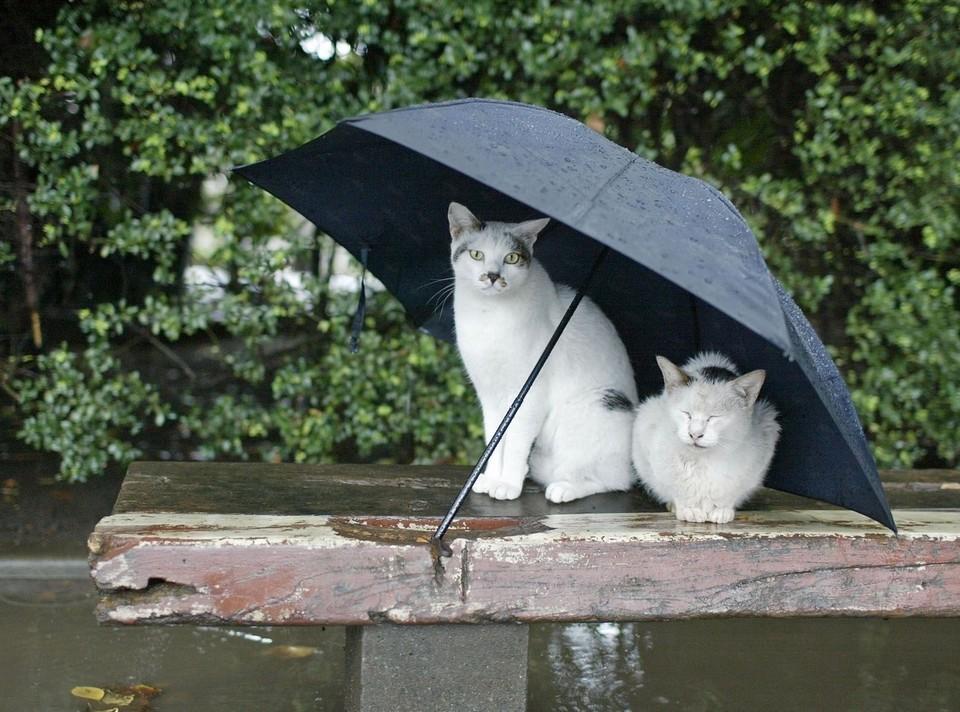 В течение дня возможны ливни.