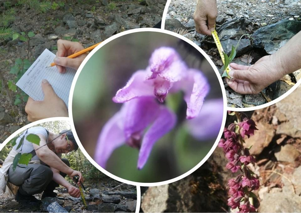Внимание уделяют каждому отдельному растению. Фото: Нацпарк «Таганай»