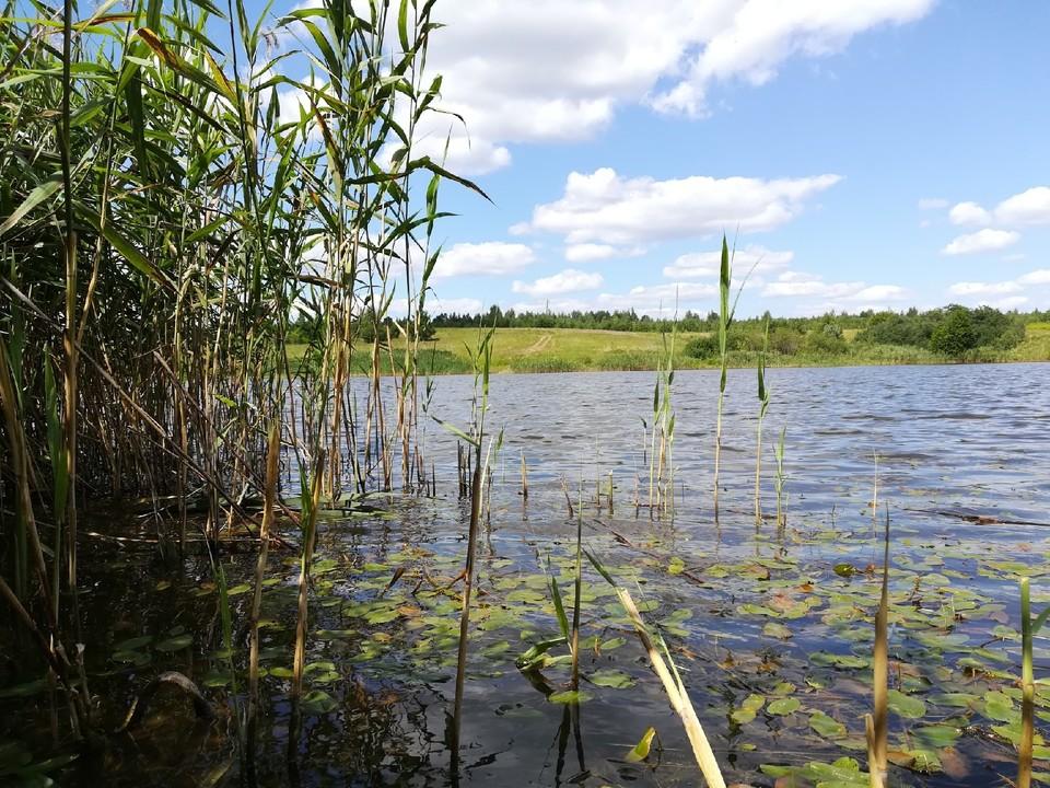 Семилетняя девочка утонула в Ардатовском районе 11 июня.