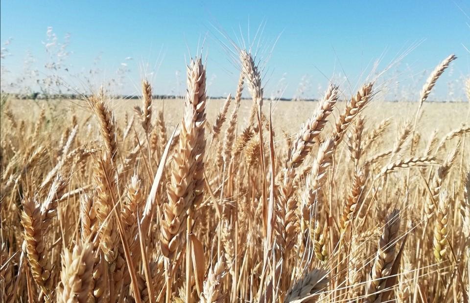 В Орловской области выявили почти 1500 тонн зерна, задекларированных в фантомных лабораториях