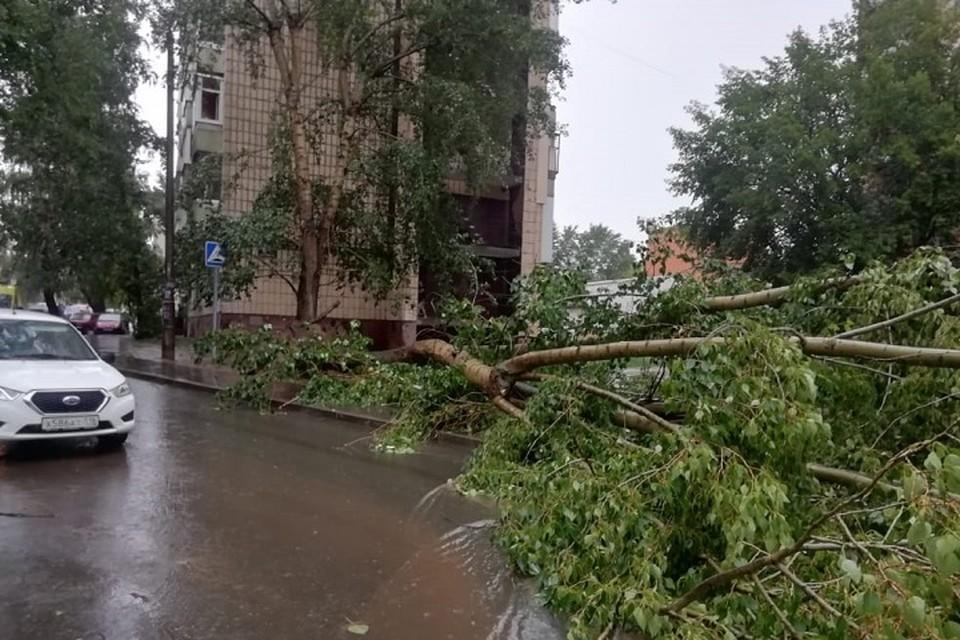 На улице Максимова дерево упало на двух женщин и одного ребенка.