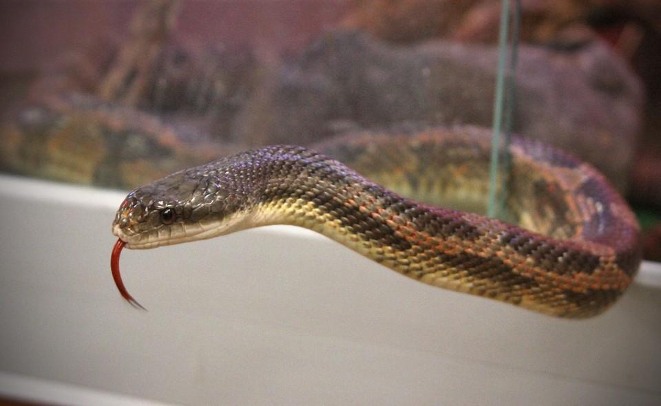 В Кузбассе из-за теплой погоды активизировались ядовитые змеи.