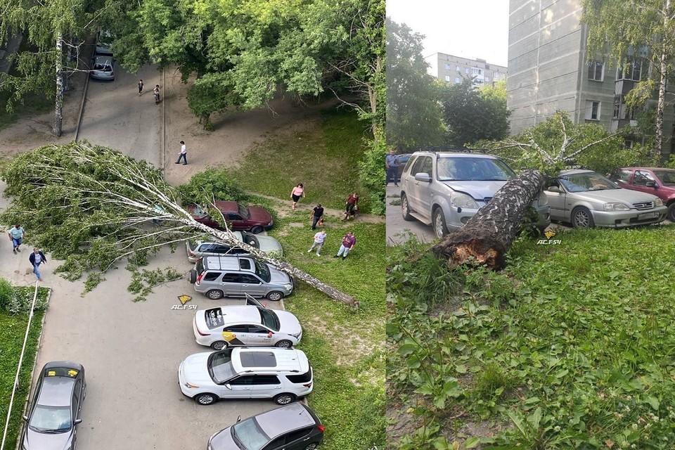 """В Новосибирске сильный ветер повалил деревья на припаркованные машины. Фото: """"АСТ-54""""."""