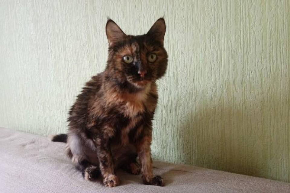 Ивановский ритуальщик продал машину и забрал донора, чтобы пересадить кошке почку в Петербурге
