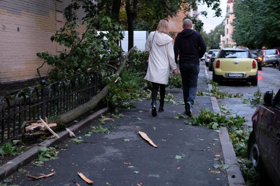 Ветер заявленной силы способен гнуть и ломать деревья.