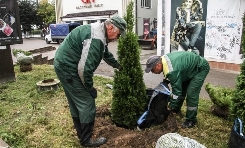 Более 1 тысячи деревьев и 8 тысяч кустарников вырастили за три года в Смоленске. Фото: пресс-служба администрации города Смоленска.
