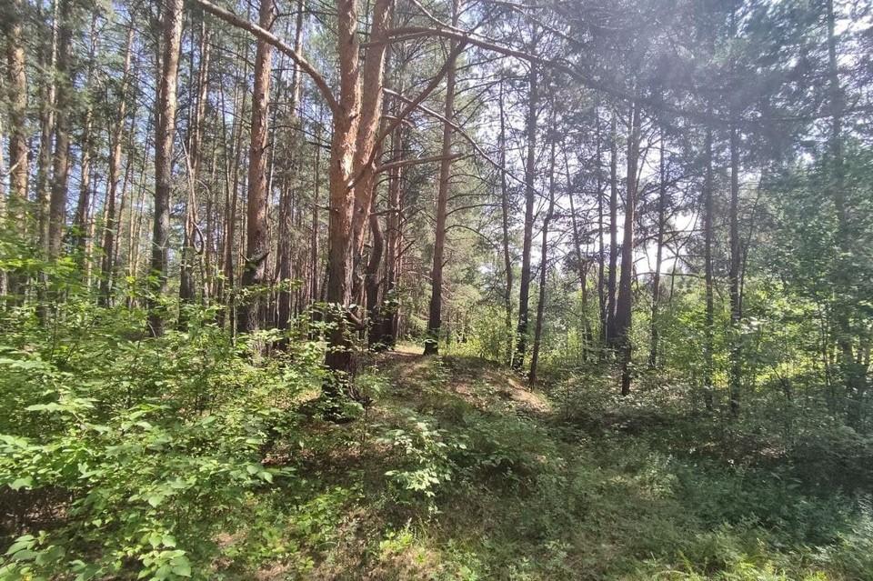 Границы городских лесов определят в двух районах Челябинска по просьбе застройщика