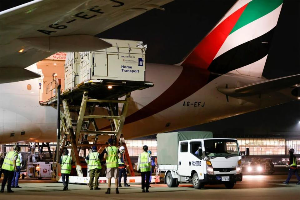 Животных доставили в Японию грузовыми рейсами. Фото: Federation Equestre Internationale