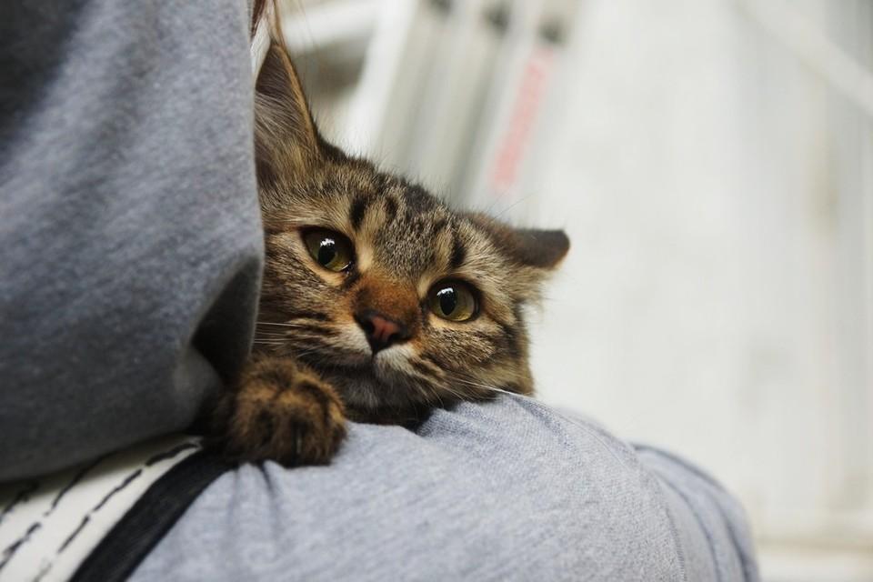 В Самарской области пьяный муж убил котенка жены