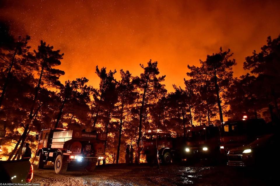 Пожары охватили лесные массивы Турции