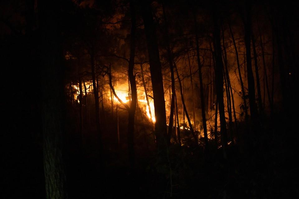 В Турции задержан подозреваемый в поджоге лесов.