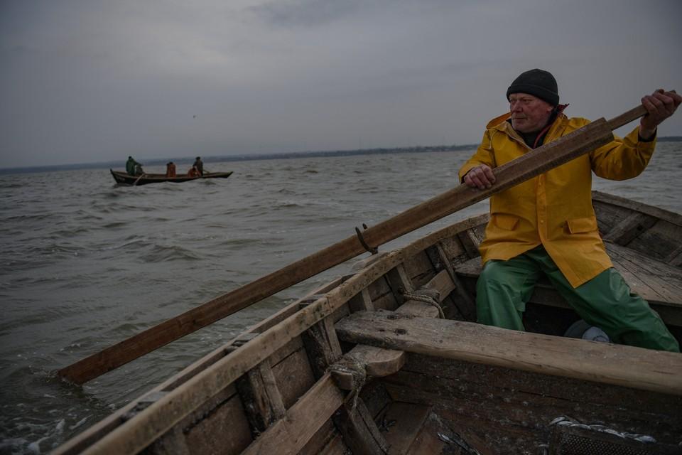 Шемая пока под запретом для рыбаков