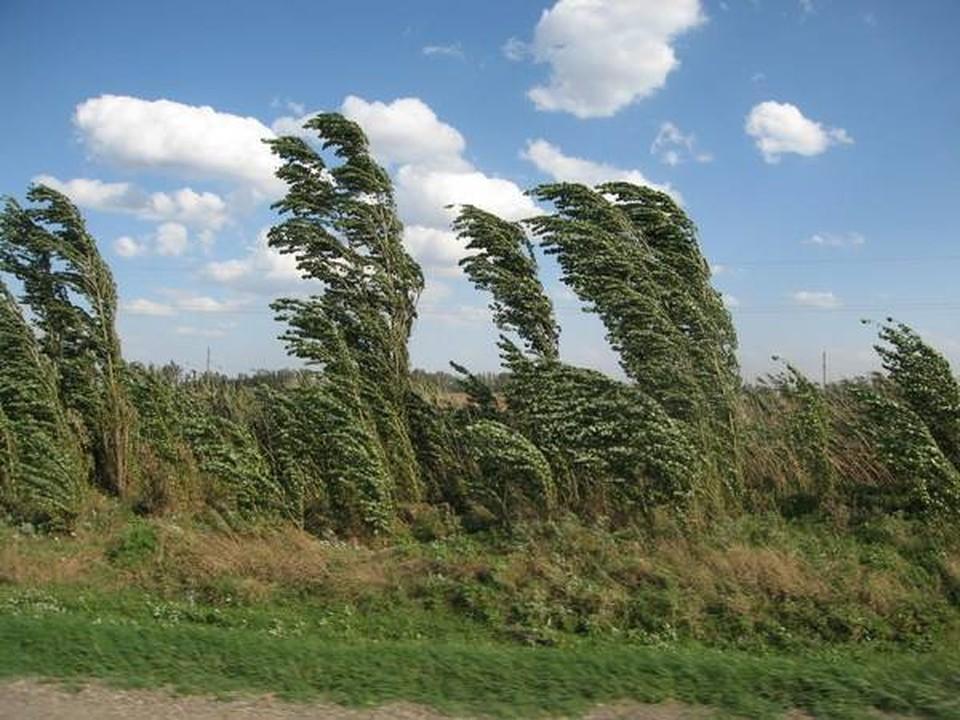 Берегитесь ветра! Фото: соцсети