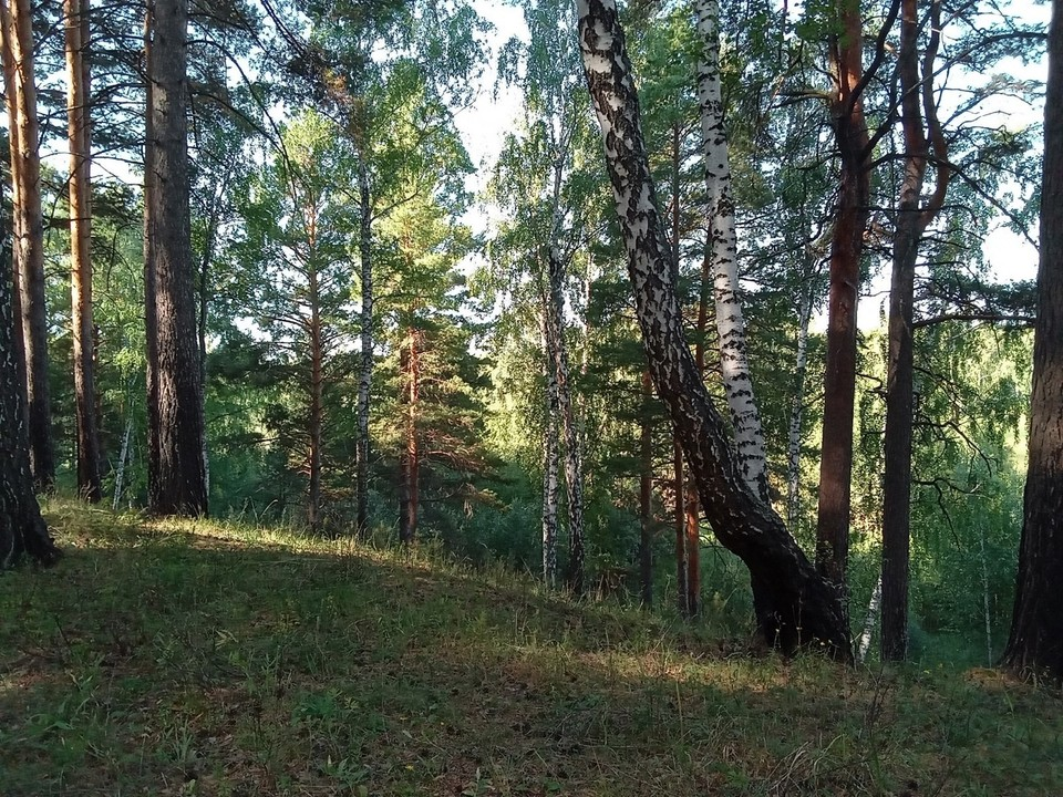 Погода на Ямале на 2 сентября