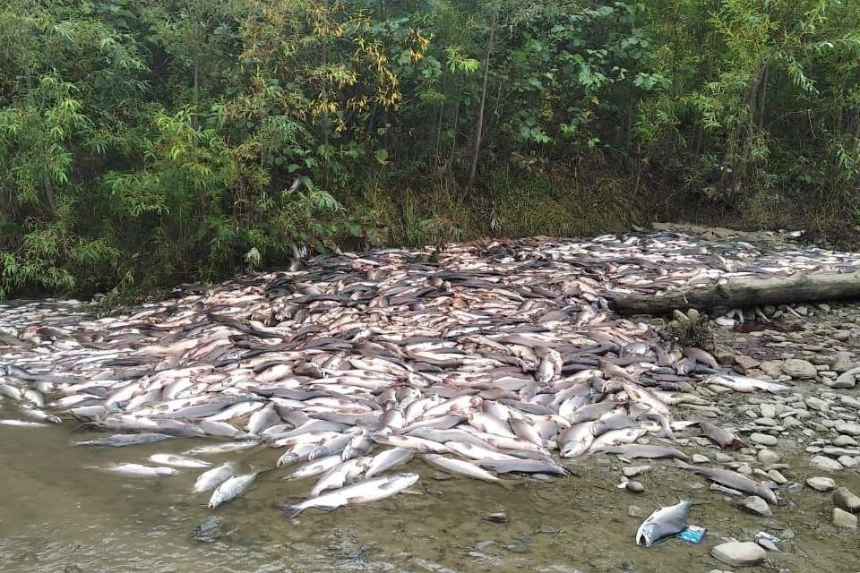 Только на небольшом участке русла реки Лазовая в 2,5 километра в ее нижнем течении экологи обнаружили 7 крупных могильников,