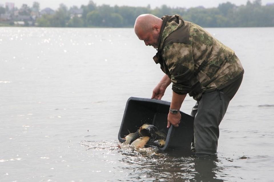 Перед тем, как выпустить рыбу в пруд, специалисты проверили качество воды, наличие кормовой базы и других популяций рыб Фото: ЕВРАЗ НТМК