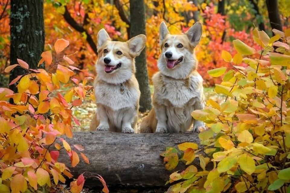 Расскажем о самых дорогих щенках, которые представлены на бесплатном сайте в сентябре 2021 года. Фото: canva.com