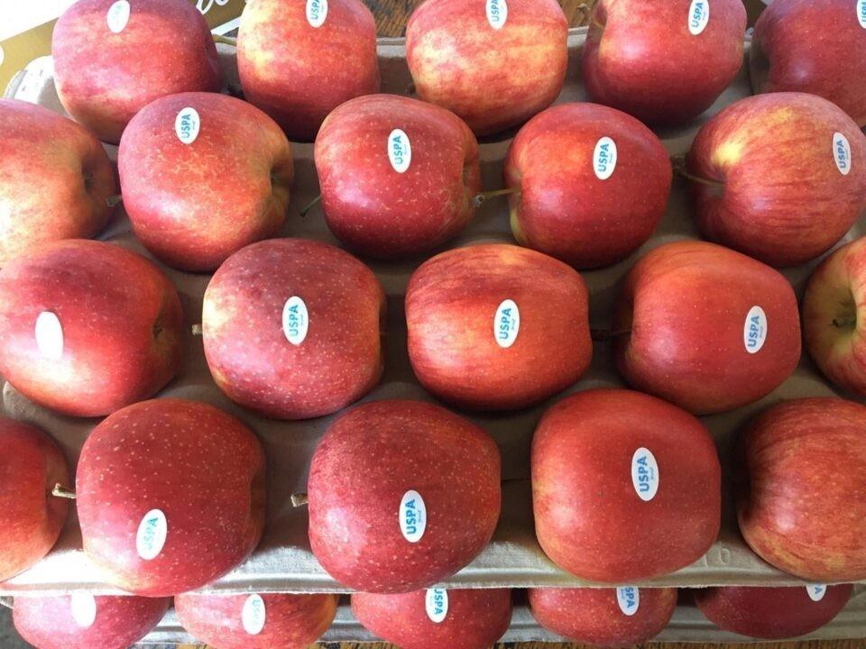 Эти яблоки пользуются самым высоким спросом в мире. Фото: east-fruit.com