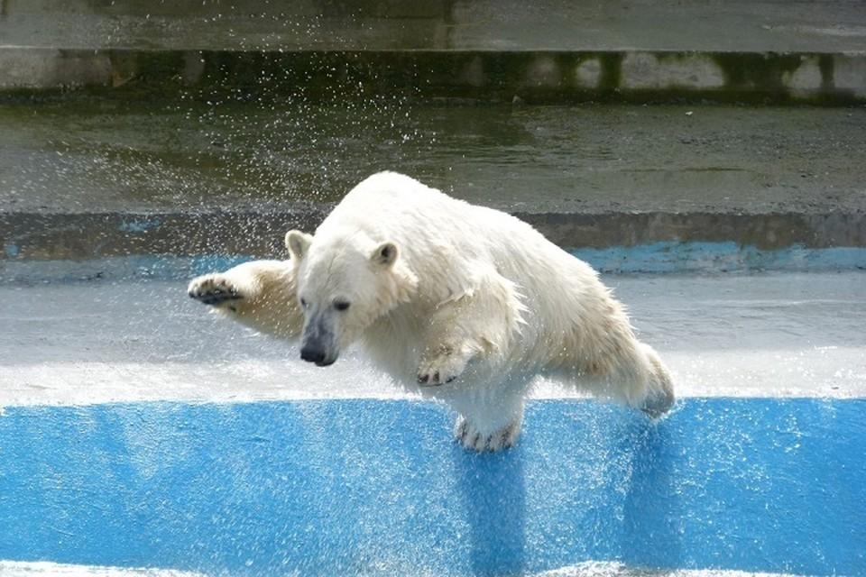 Новый белый медведь появится в хабаровском зоосаде. Фото: Дагмар Рацдак и Франк Кюн.