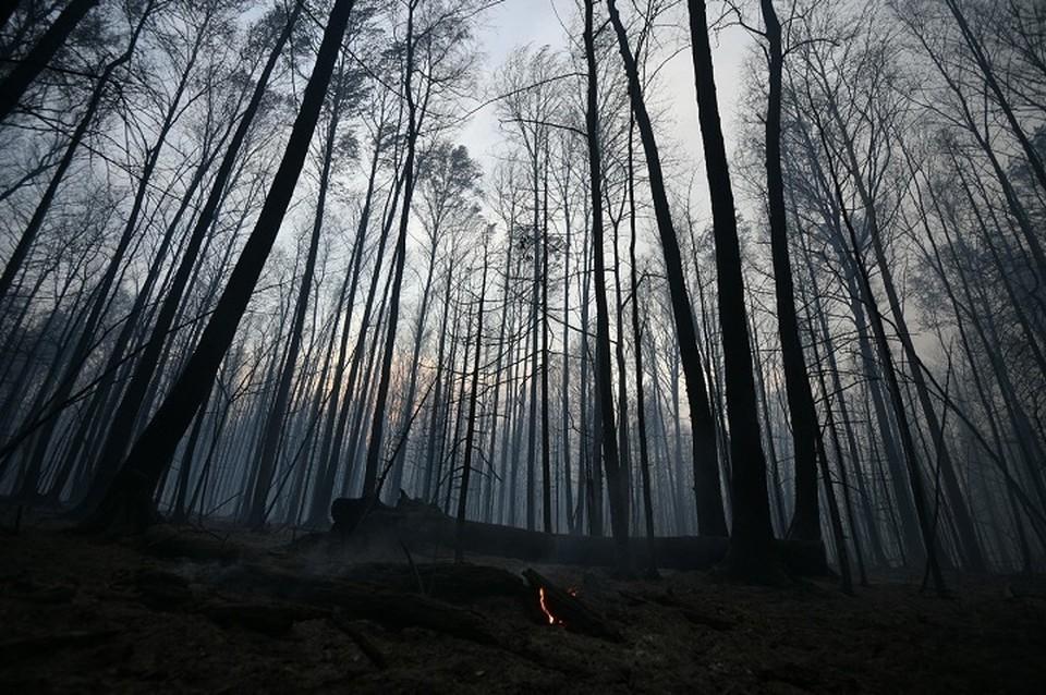 Уральцам нельзя разводить открытый огонь в лесах и на своих личных участках