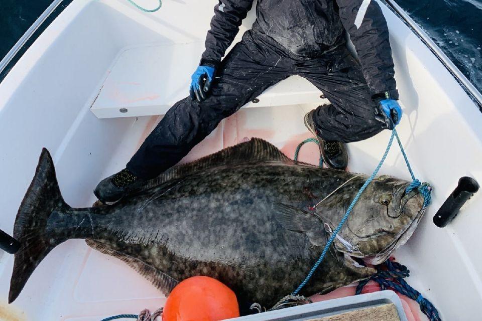 Точный вес палтуса составил 88,9 килограмм, а длина - 1,9 метров. Фото: Алексей Тревога