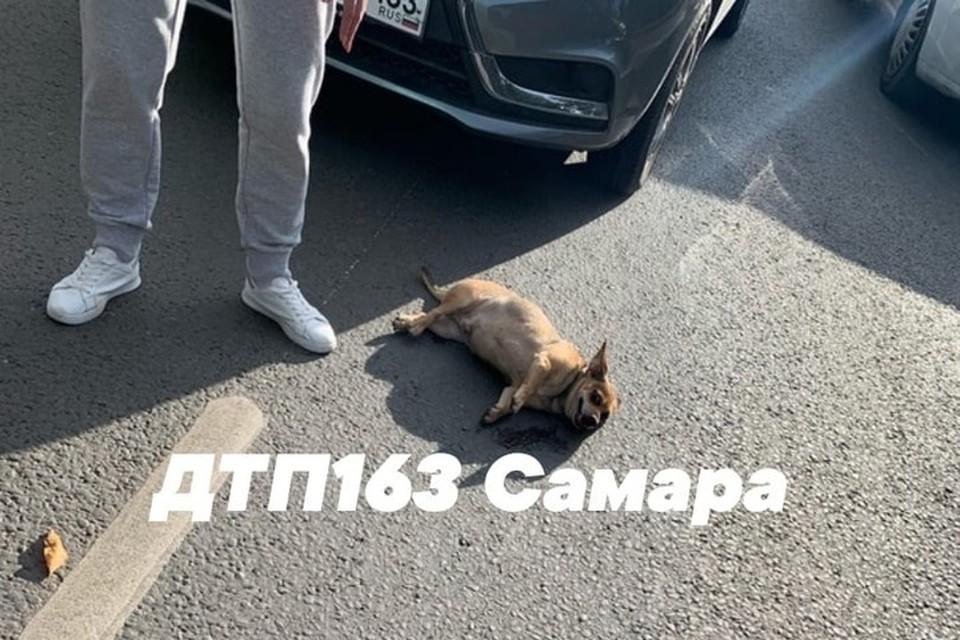 Мужчина и его пес получили травмы. Фото: vk.com/dtp_163