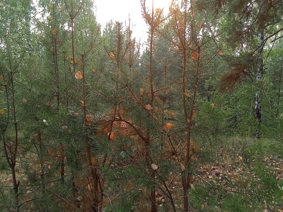 Погода на Ямале на 13 сентября