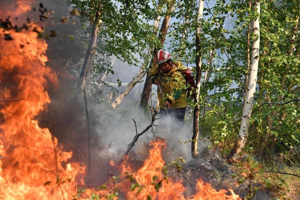Путин поручил ежегодно выделять регионам еще по 8 миллиардов рублей на охрану лесов от пожаров