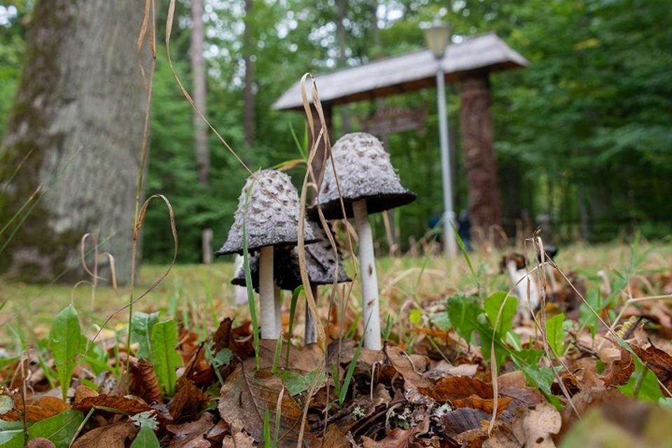 Двух заблудившихся грибников нашли в лесу Хабаровского района