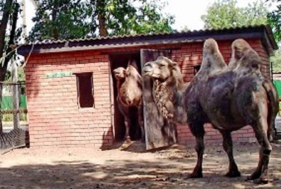 Фото: сайт Каневского сельского поселения