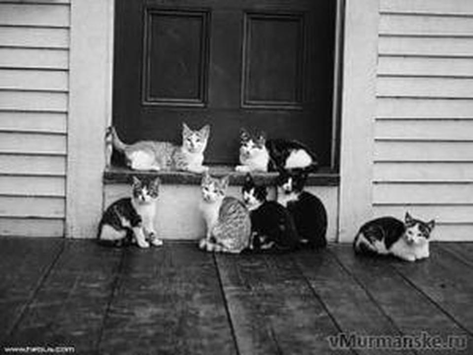 Несчастные кошки после смерти хозяйки оказались заперты в пустой квартире.