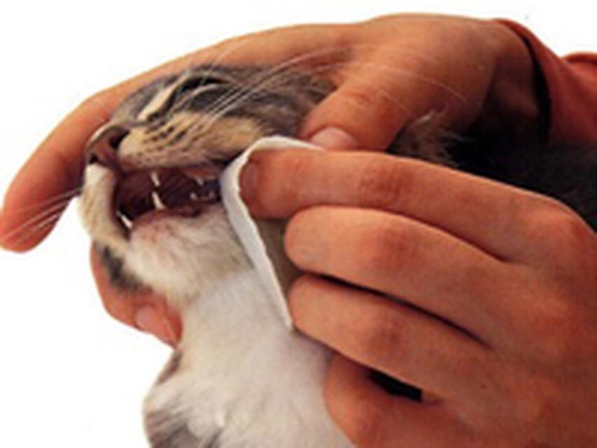 какие нада делать уколы при стамотите у кота