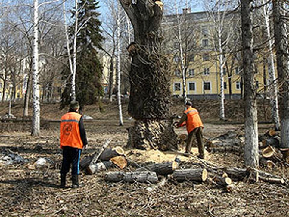 Ремонт набережной начался со спилки старых деревьев