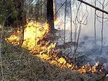 Лесные угодья горят и спасти их не могут