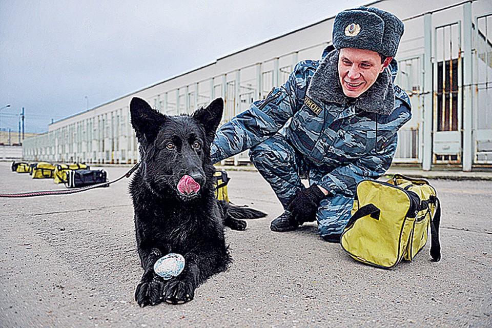 Сумку с учебной взрывчаткой Донни нашла за несколько секунд. После чего получила мячик и ласку корреспондента «КП».