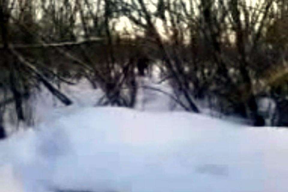 """Ребята из Урска сняли йети в лесу на сотовый телефон: """"снежный"""" человек - в центре кадра."""