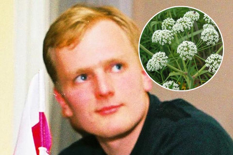 Белорусский байдарочник во время похода отравился ядовитой цикутой?