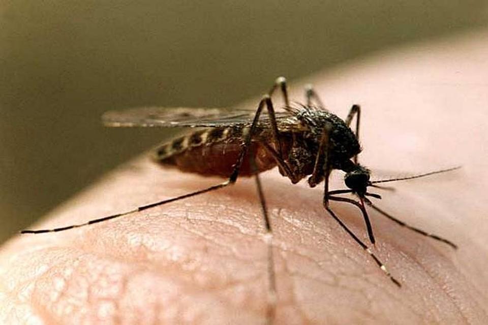 новом доме почему комары одних кусают а других нет известен глубокой